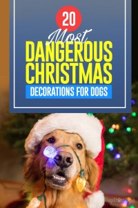 The 20 Most Dangerous Christmas Decorations for Dogs