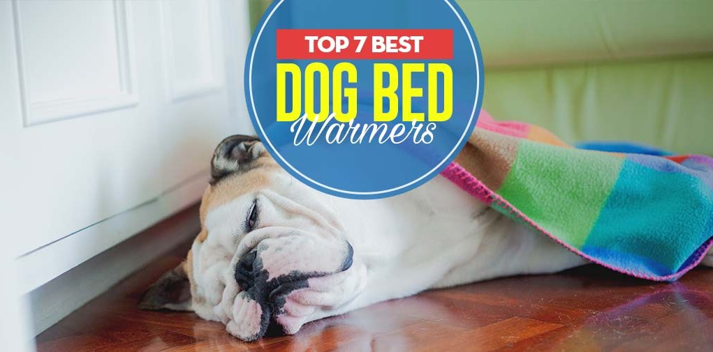 The 7 Best Dog Bed Warmers