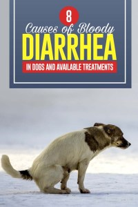The 8 Causes of Bloody Diarrhea in Dogs