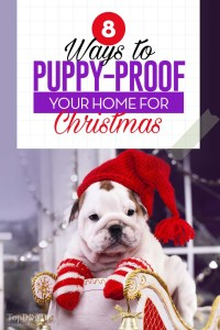 The 8 Ways to Puppy-Proof Your Home for Christmas