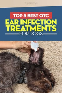 The Best Dog Ear Infection Treatment