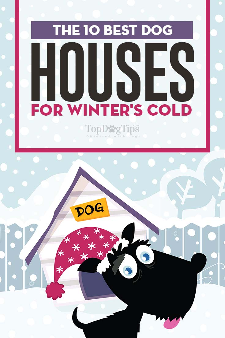 The Best Dog Houses for Winter