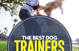 The Best Dog Trainers in San Diego