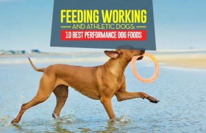 Top 10 Best Performance Dog Foods for Working and Athletic Dogs
