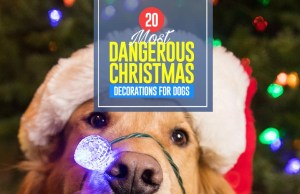 Top 20 Most Dangerous Christmas Decorations for Dogs