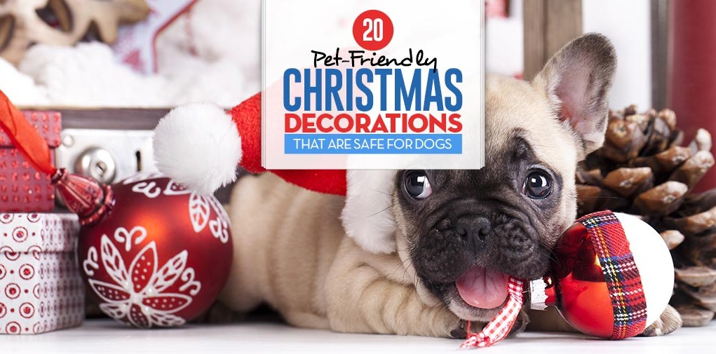 Top 20 Pet-Friendly Christmas Decorations Safe for Dogs