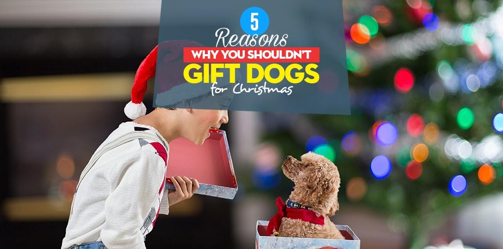 Top 5 Reasons Why You Shouldn't Gift Dogs for Christmas