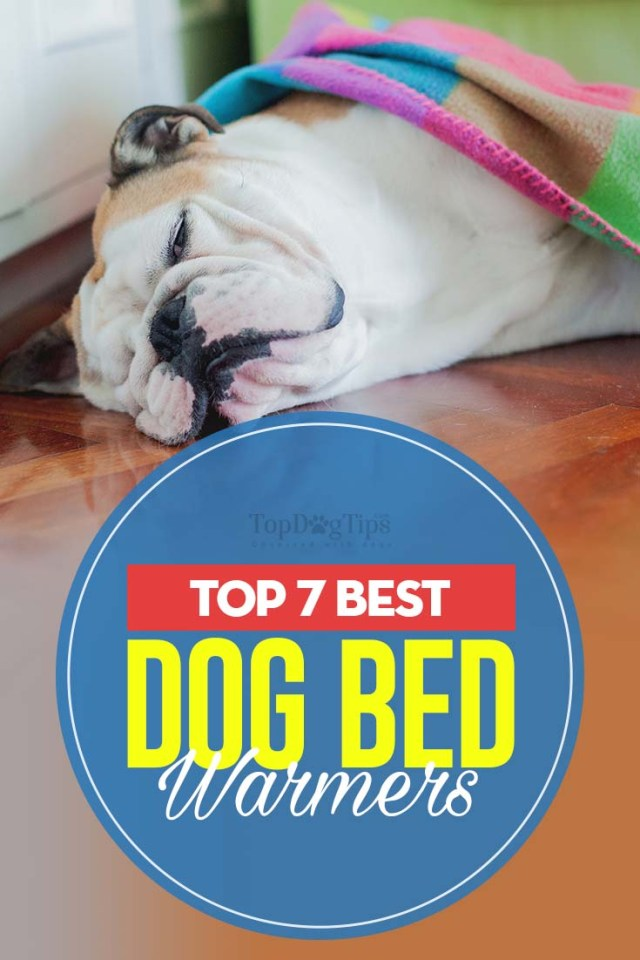 Top 7 Best Dog Bed Warmers