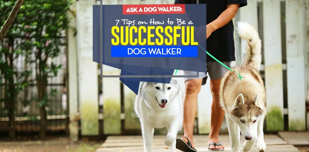 Top 7 Tips on How to Be a Successful Dog Walker