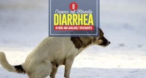 Top 8 Causes of Bloody Diarrhea in Dogs and Available Treatments