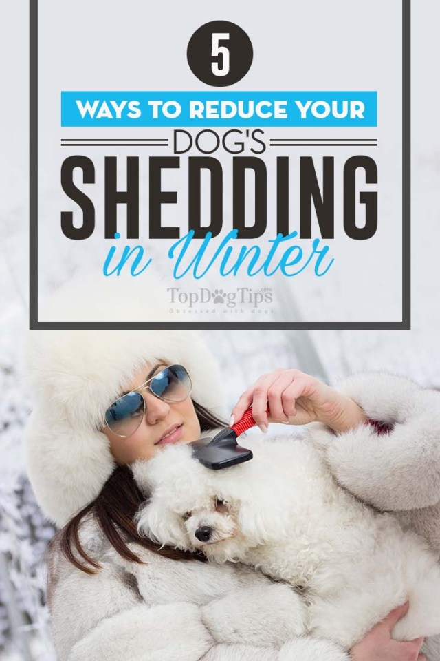 Top Ways to Reduce Excessive Dog Shedding in Winter