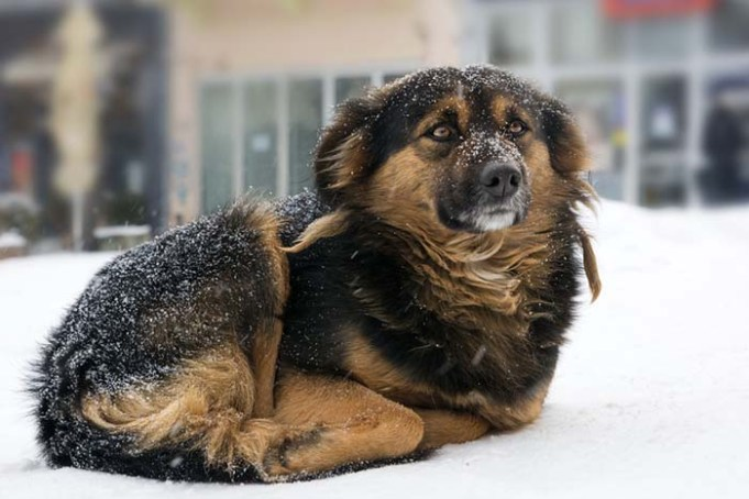 When Is It Too Cold for Dogs In Winter