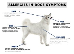 10 Common Symptoms of Winter Allergies in Dogs