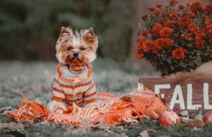 The Best Thanksgiving dog sweater