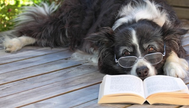 best dog books