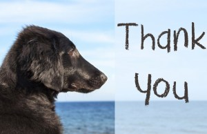 best dog thanksgiving cards