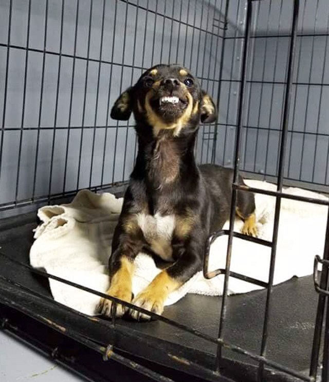 Homeless Dog's Hilarious Grin Goes Viral, Gets Him a Home