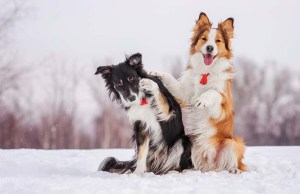 19 Ways to Keep Your Dog Healthy During Winter Months