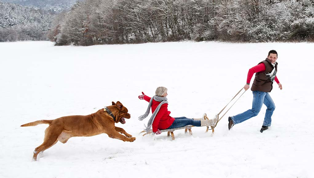 25 Fun Winter Adventures to Have With Your Dog