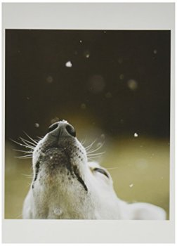 Nouvelles Images Holiday Note Card Set