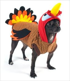 Puppe Love's Turkey Costume for Dogs