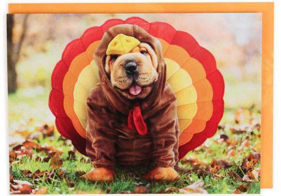 A Dog in Turkey Costume