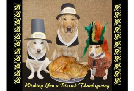 A Group of Thanksgiving Dogs