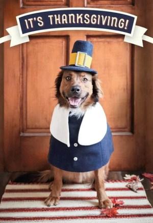A Real Pilgrim Dog