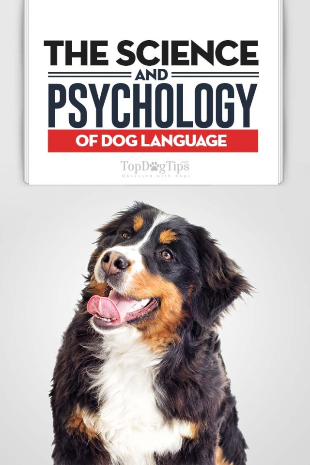 Canine Science and Psychology of Dog Language