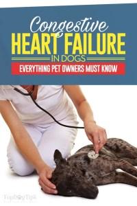 Congestive Heart Failure in Dogs