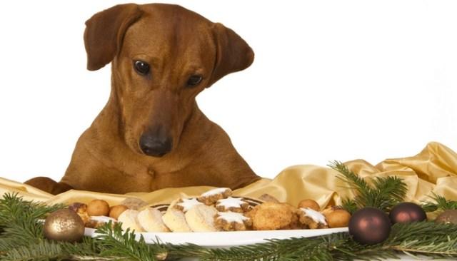 Dog Christmas Safety Tips