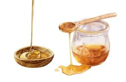 Honey for Dogs As An Ingestible