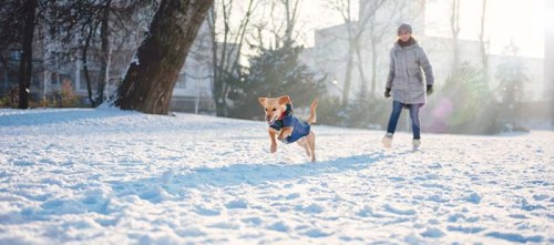 Play fetch with dogs in the snow