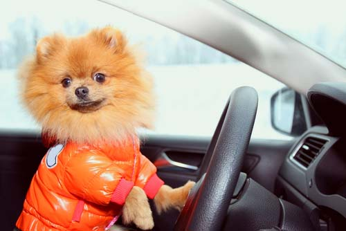 Take a Car Ride with Your Dog