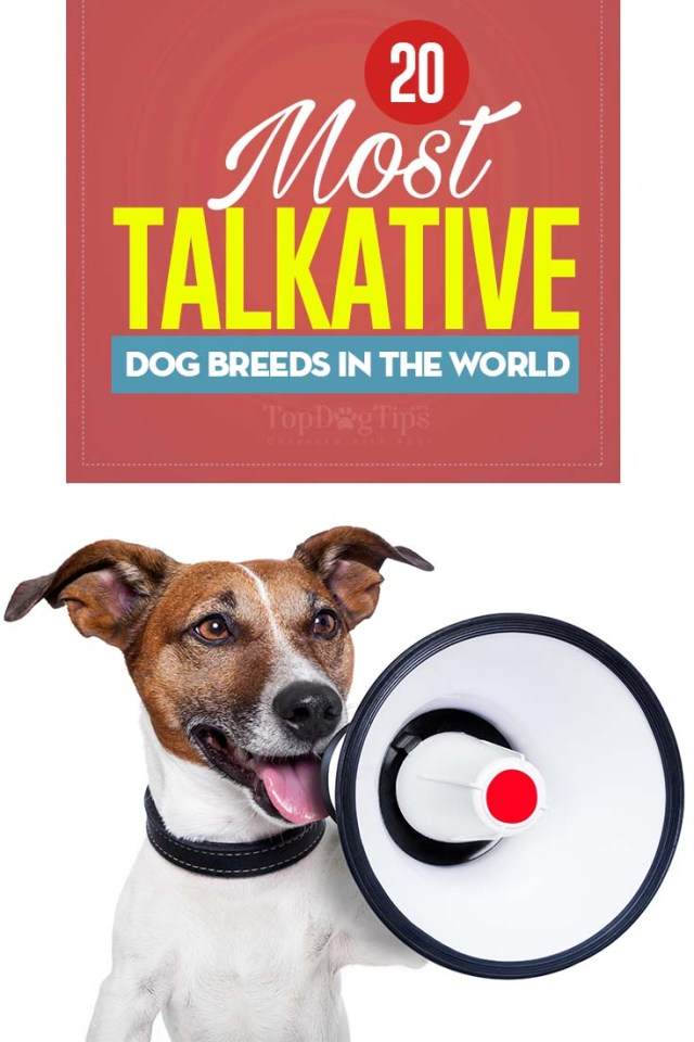 The 20 Most Talkative Dog Breeds