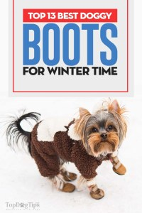 The Best Dog Boots for Winter