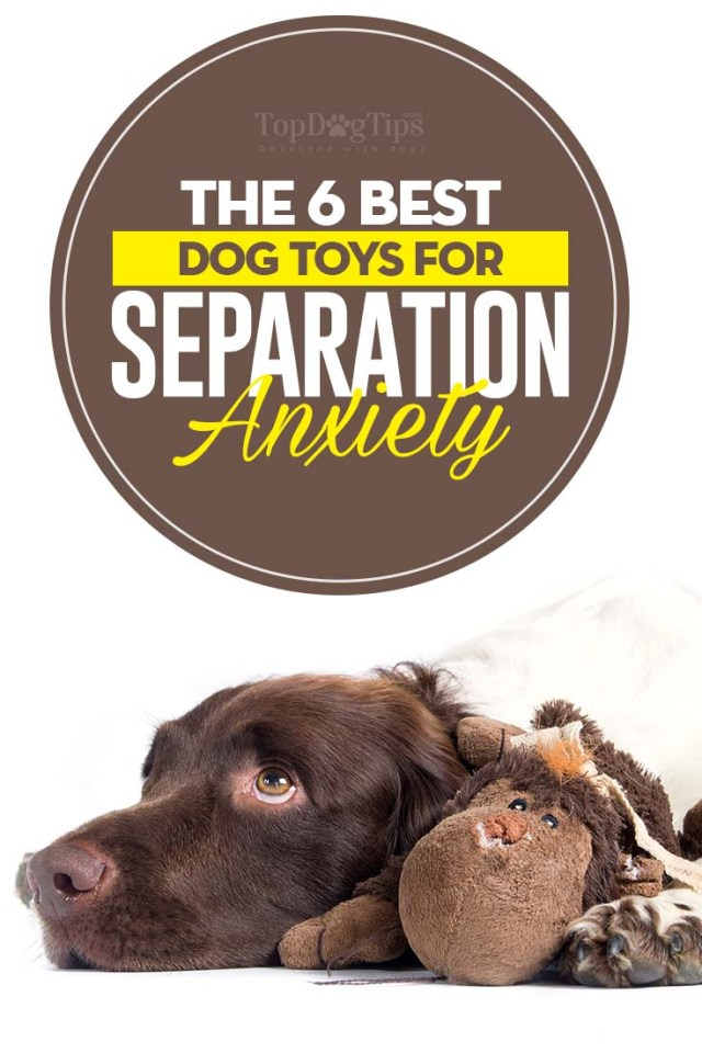 The Best Dog Toys for Separation Anxiety