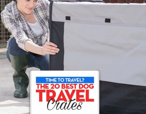The Best Dog Travel Crates