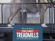 The Best Dog Treadmill Choices for Exercise and Recovery