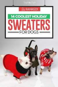 The Best Holiday Dog Sweaters