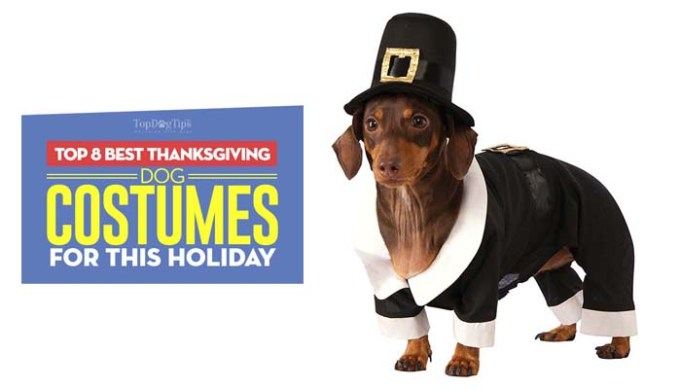 The Best Thanksgiving Dog Costumes for the Holiday