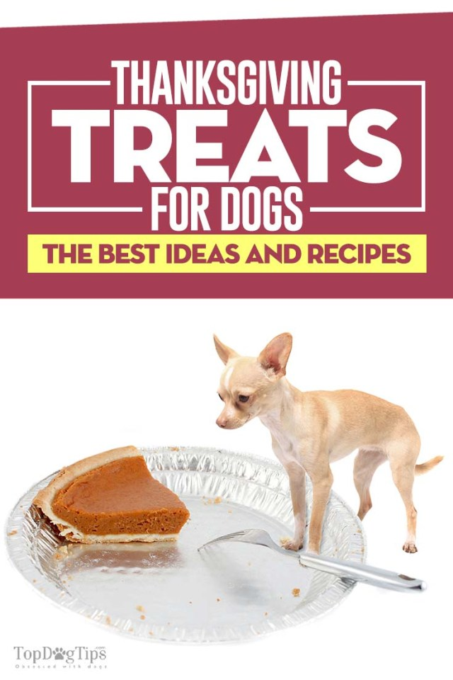The Best Thanksgiving Treats for Dogs