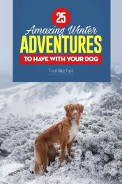 The Best Winter Adventures with Your Dog