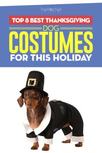 Top 8 Best Thanksgiving Dog Costumes for 2017's Holiday Season
