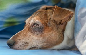 Winter Allergies in Dogs - Causes, Symptoms and Treatments