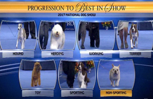 Here are the Results of the 2017 National Dog Show!