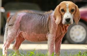 Best Dog Skin Infection Treatment