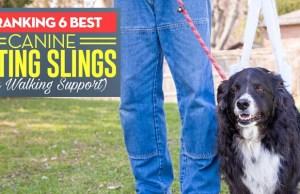 Best Dog Sling Harness
