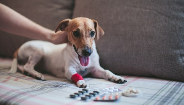 How and Where to Buy Cheap Pet Meds Online