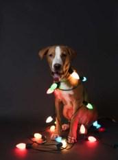 Dog Christmas dangers